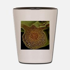 Leaf midrib, SEM Shot Glass