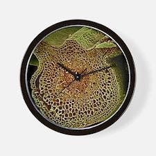Leaf midrib, SEM Wall Clock