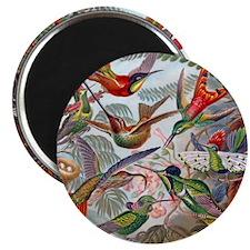 Vintage Hummingbirds Painting Magnet