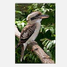 Laughing kookaburra Postcards (Package of 8)