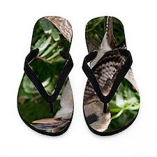 Laughing kookaburra Flip Flops
