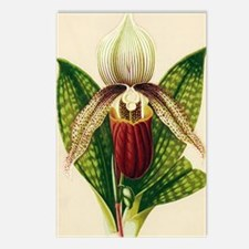 Lady's slipper orchid Postcards (Package of 8)