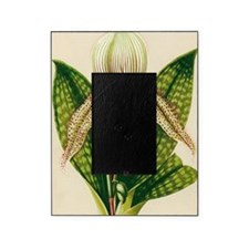 Lady's slipper orchid Picture Frame