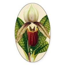 Lady's slipper orchid Decal