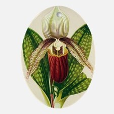 Lady's slipper orchid Oval Ornament