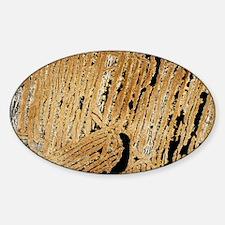 Komatitite rock, light micrograph Decal