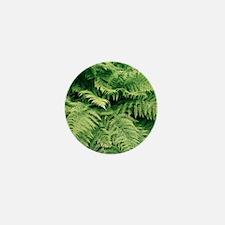 Lady fern fronds (Athyrium filix-femin Mini Button
