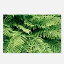 Lady fern fronds (Athyriu Postcards (Package of 8)
