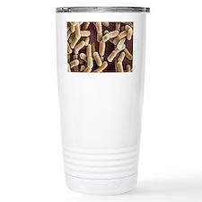 Lactobacillus bacteria, SEM Travel Mug