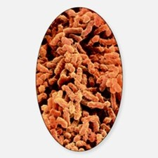 Klebsiella pneumoniae bacteria Decal