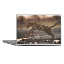 Leopard Panthera pardus jumping over  Laptop Skins