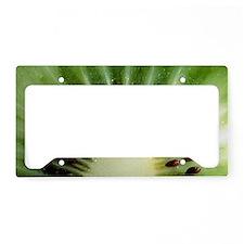 Kiwi slice License Plate Holder