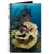 Kasi Maru shipwreck and coral Journal