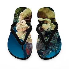 Kasi Maru shipwreck and coral Flip Flops