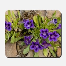 Karoo violets (Aptosimum indivisum) Mousepad