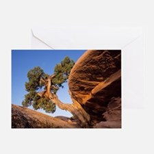 Juniper tree Greeting Card