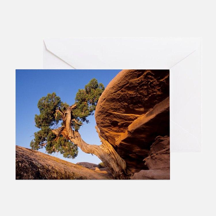 Juniper tree Greeting Card