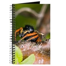 Jumping Spider Journal