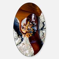 Kelp holdfast (Laminaria digitata) Sticker (Oval)