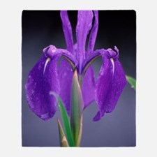 Japanese water iris (Iris laevigata) Throw Blanket
