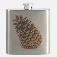 Jeffrey pine cone (Pinus jeffreyi) Flask