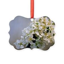 Japanese plum blossom (Prunus sal Ornament