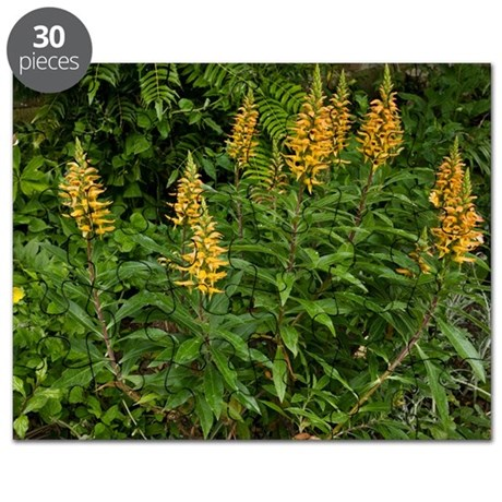 Isoplexis canariensis flowers Puzzle