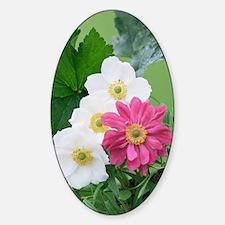 Japanese anemone flowers Decal