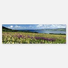 Isle of Jura, Scotland Bumper Bumper Sticker
