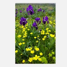 Iris lutescens and Ranunc Postcards (Package of 8)