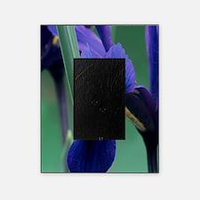 Iris Picture Frame
