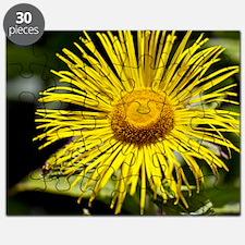 Inula hookeri flower Puzzle