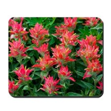 Indian paintbrush flowers Mousepad