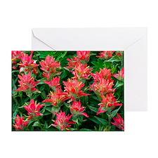 Indian paintbrush flowers Greeting Card