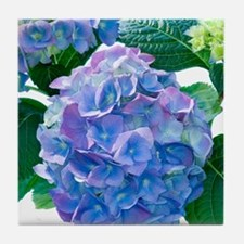 Hydrangea (Hydrangea macrophylla) Tile Coaster