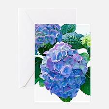 Hydrangea (Hydrangea macrophylla) Greeting Card
