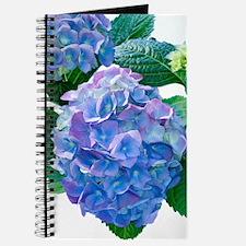 Hydrangea (Hydrangea macrophylla) Journal
