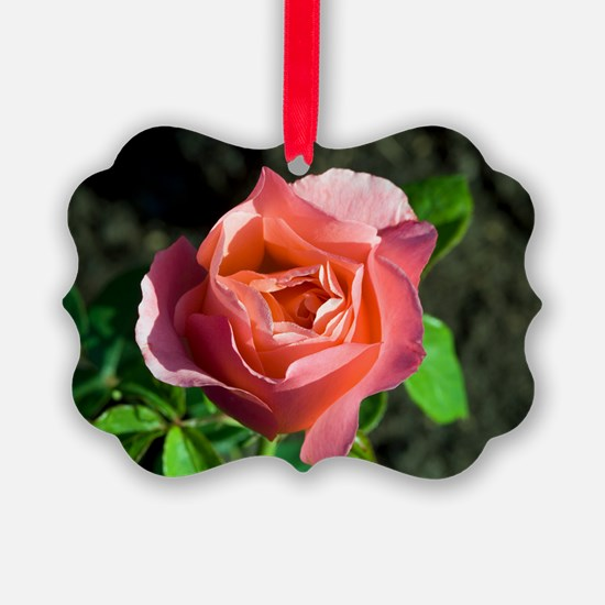 Hybrid tea rose (Rosa 'Lovely Lad Ornament