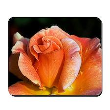 Hybrid tea rose (Rosa 'Can-Can') Mousepad