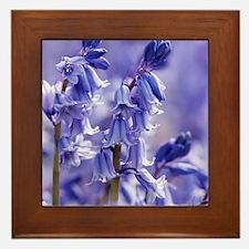 Hyacinthoides x massartiana Framed Tile