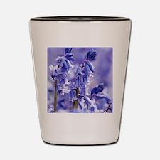 Hyacinthoides x massartiana Shot Glass