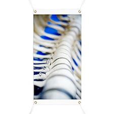Human spine model Banner