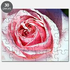 Hybrid tea rose (Rosa 'Savoy Hotel') Puzzle
