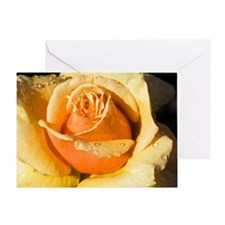 Hybrid tea rose (Rosa 'Royal Parks') Greeting Card