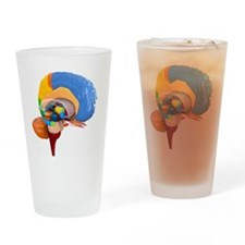 Human brain anatomy, artwork Drinking Glass