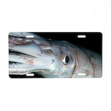 Humboldt squid at night Aluminum License Plate