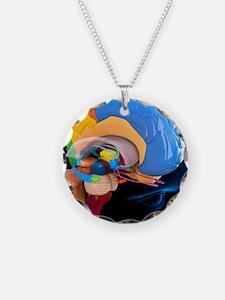 Human brain anatomy, artwork Necklace