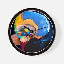 human brain anatomy artwork wall clock anatomy office