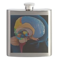 Human brain anatomy, artwork Flask