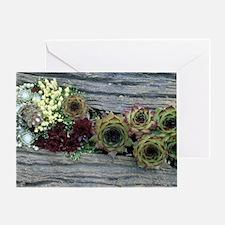 Houseleeks (Jovibarba heuffelii) Greeting Card